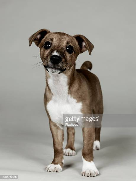 portrait of dog  - cute stock pictures, royalty-free photos & images