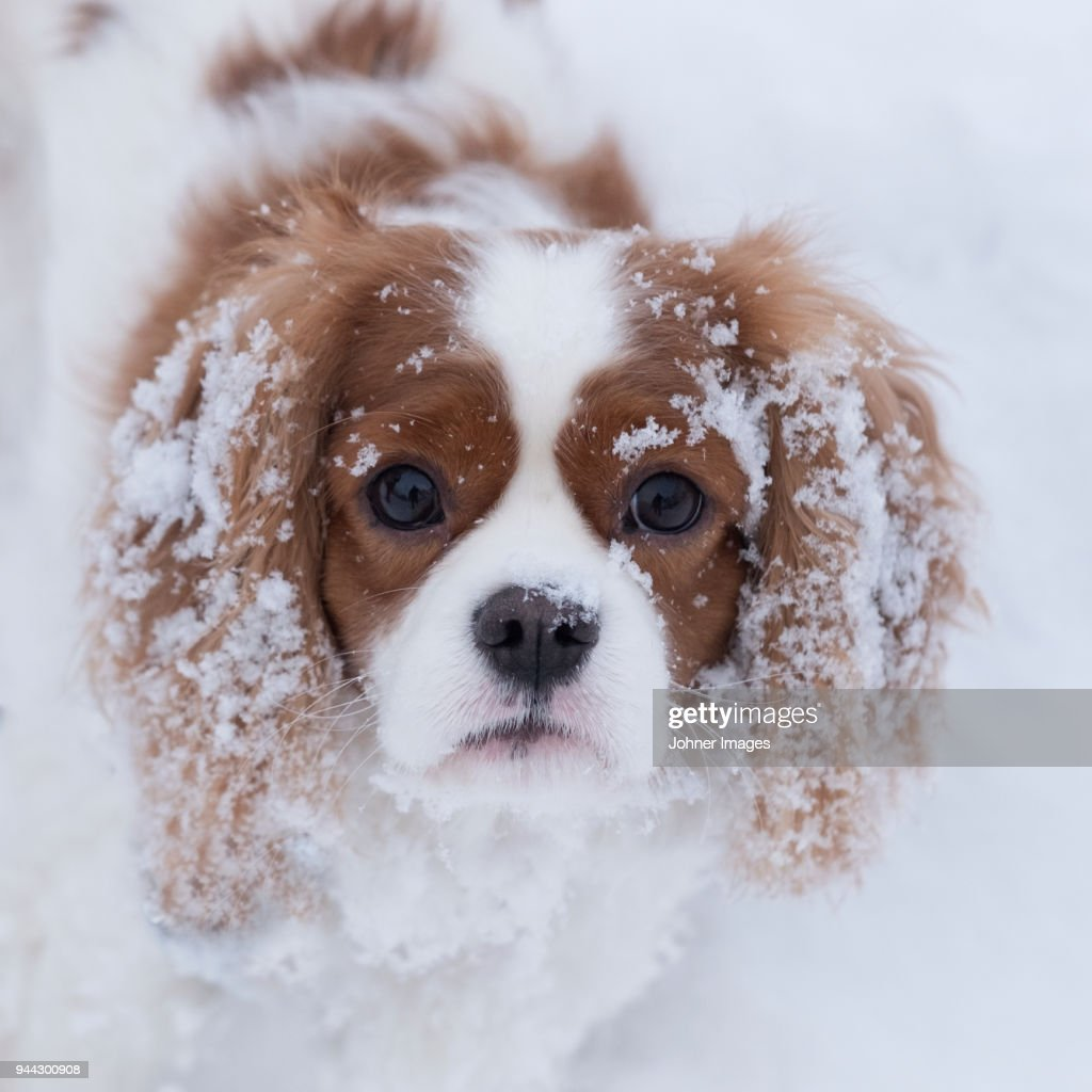 Portrait of dog : Foto de stock