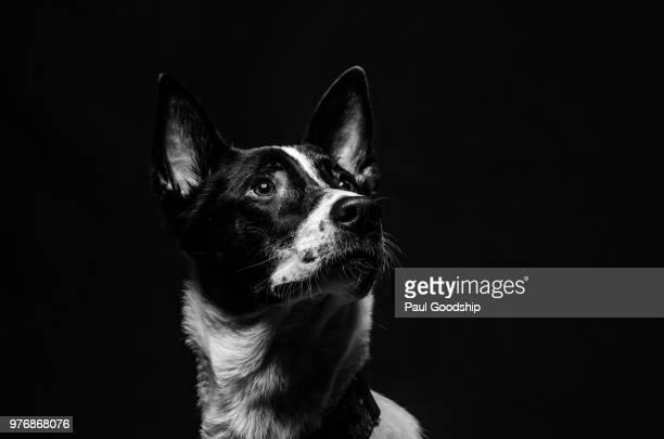 Portrait of dog, Quebec, Canada