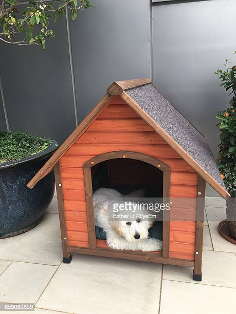Portrait Of Dog Relaxing In Kennel