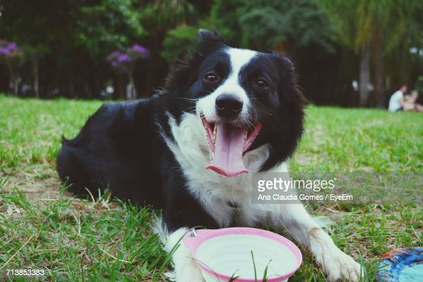 Portrait Of Dog Relaxing On Grass