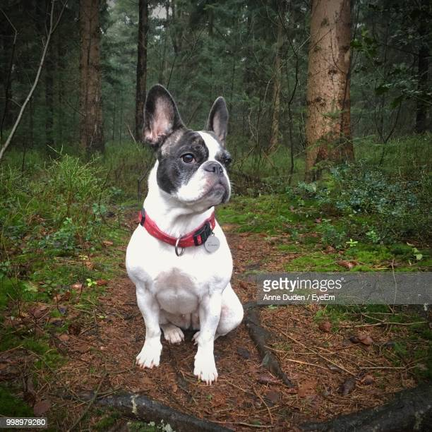 Portrait Of Dog Sitting In Forest