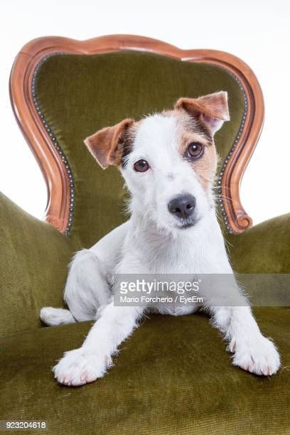 Portrait Of Dog Sitting On Armchair Against White Background
