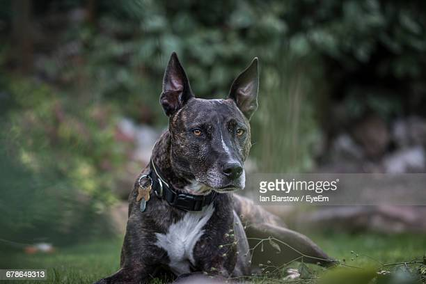 portrait of dog sitting on grassy field - barstow stock photos and pictures