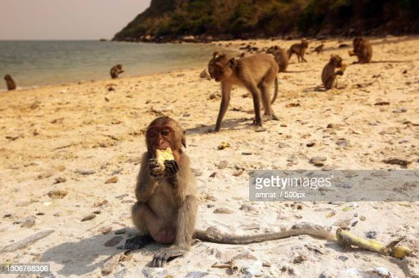 portrait of dog sitting on sand at beach - hua hin thailand stock pictures, royalty-free photos & images