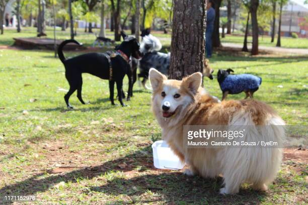 portrait of dog standing at park - mauricio caetano de souza stock photos and pictures