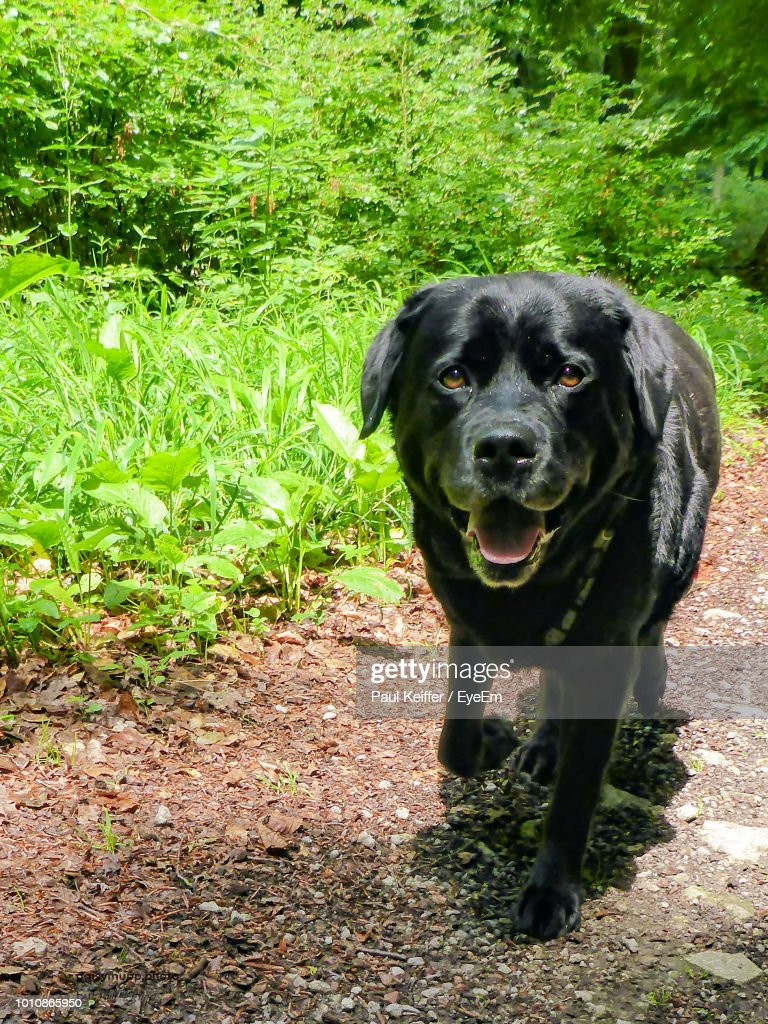 Portrait Of Dog Standing On Field : Stock Photo