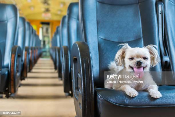 Portrait Of Dog Sticking Out Tongue In Train