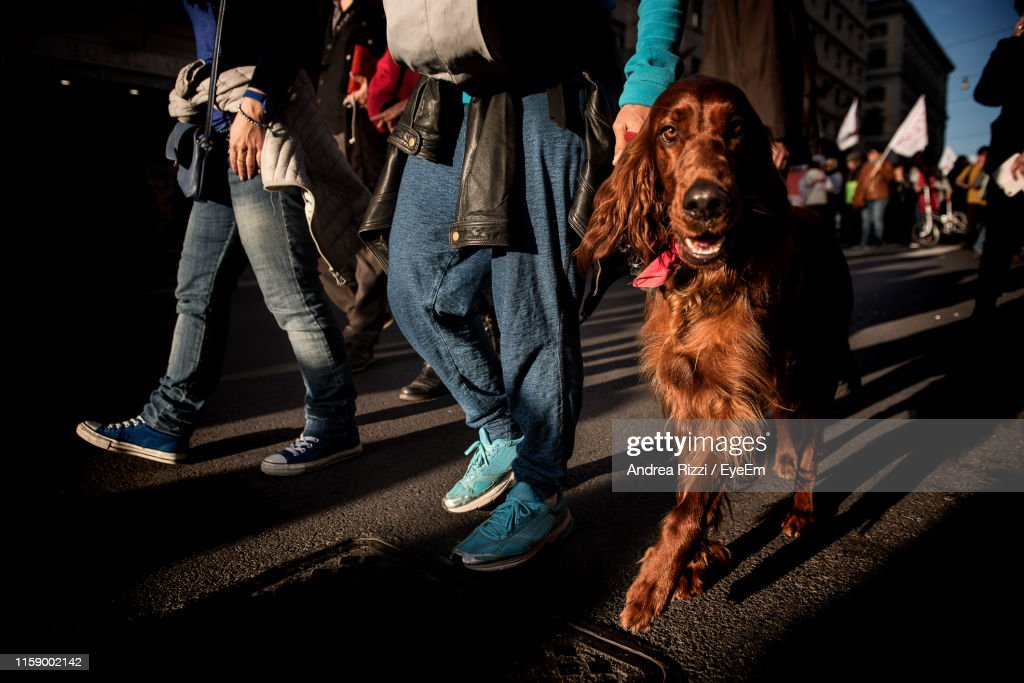 Portrait Of Dog Walking By People On Street In City : Stock Photo