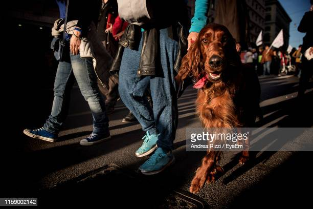 portrait of dog walking by people on street in city - andrea rizzi stockfoto's en -beelden