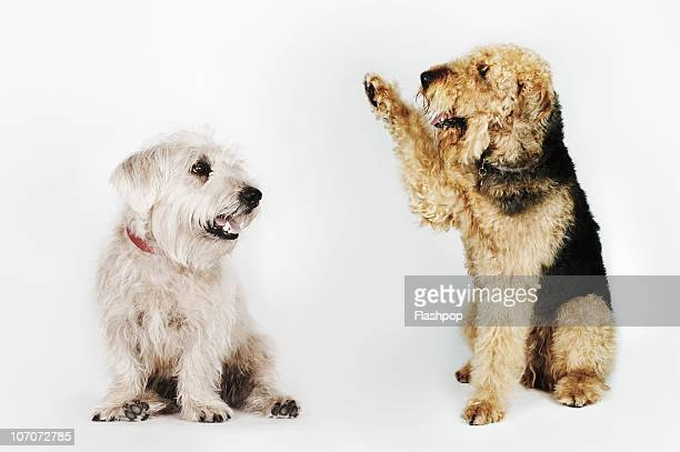 Portrait of dog waving at another dog