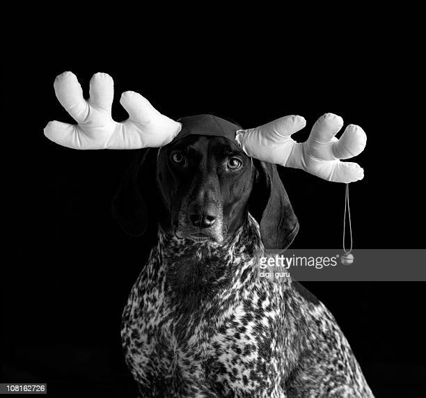 Portrait von Hund trägt Antlers mit Bell, schwarz und weiß