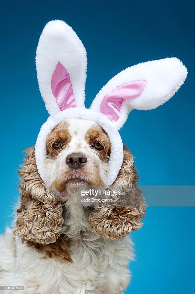 Portrait of dog wearing Easter bunny ears