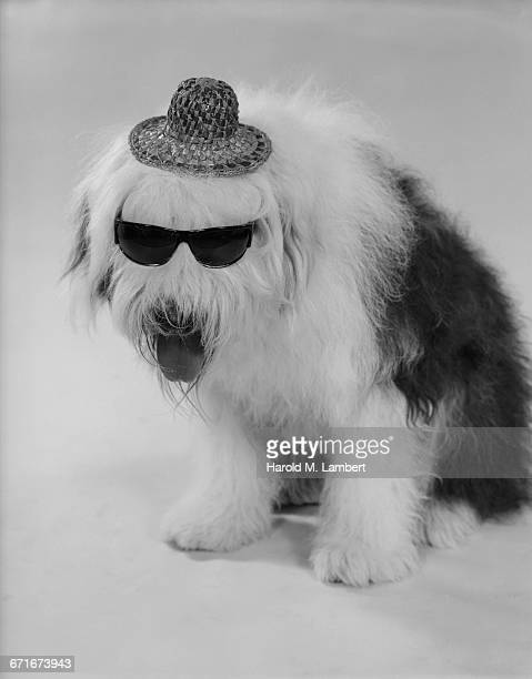 Portrait Of Dog Wearing Hat And Sunglasses