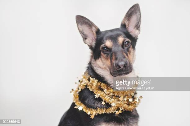 Portrait Of Dog Wearing Tinsel Garland Against White Background