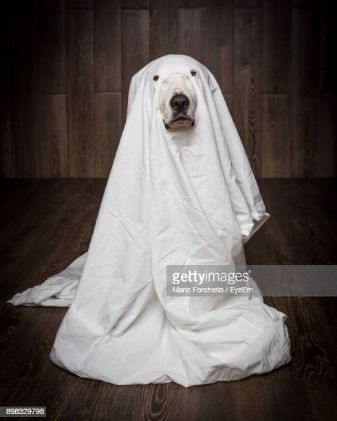 Portrait Of Dog Wearing White Costume
