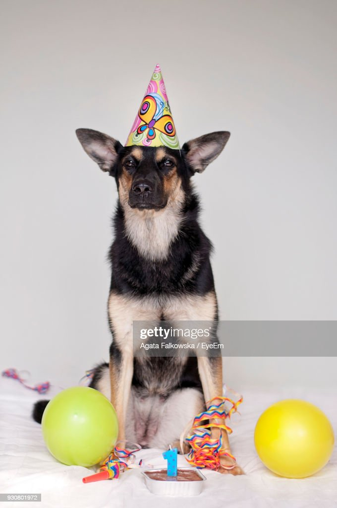 Magnificent Portrait Of Dog With Birthday Cake Sitting On Bed Against White Personalised Birthday Cards Paralily Jamesorg
