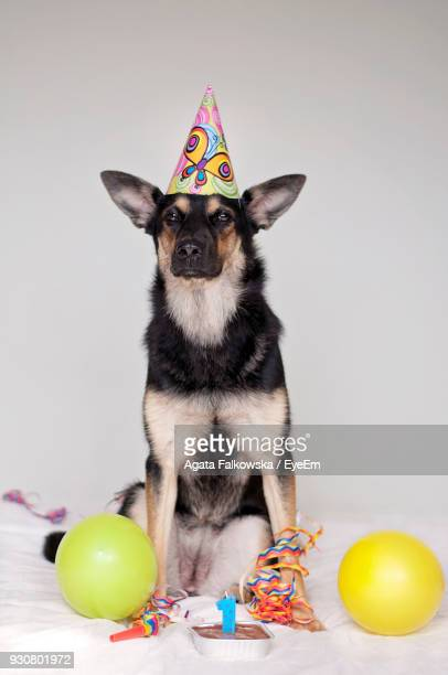 Portrait Of Dog With Birthday Cake Sitting On Bed Against White Background