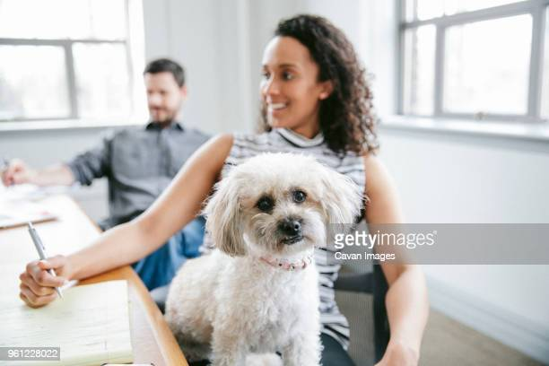 portrait of dog with business people in board room - dog pad foto e immagini stock