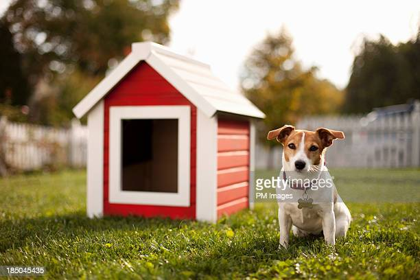 portrait of dog with dog house - blame stock pictures, royalty-free photos & images