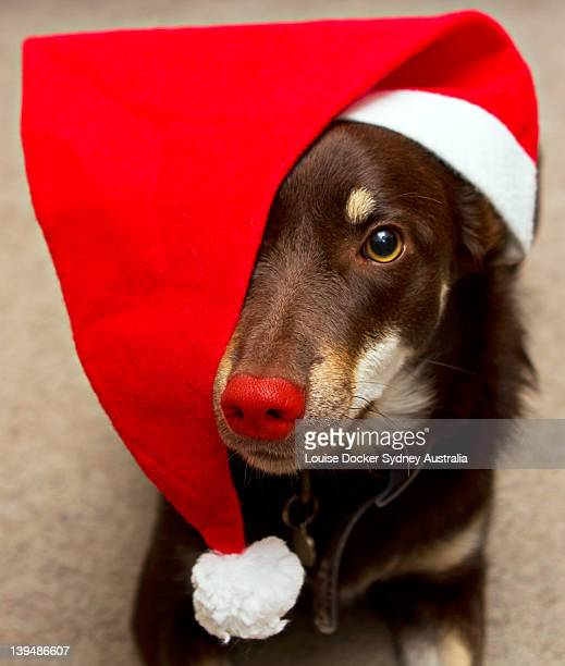 Portrait of dog with red hat and red nose