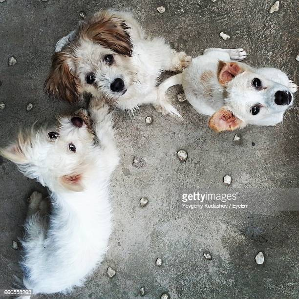 portrait of dogs on footpath - three animals stock pictures, royalty-free photos & images