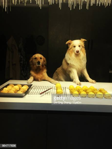 portrait of dogs with fried food on table in dark - kunming stock pictures, royalty-free photos & images