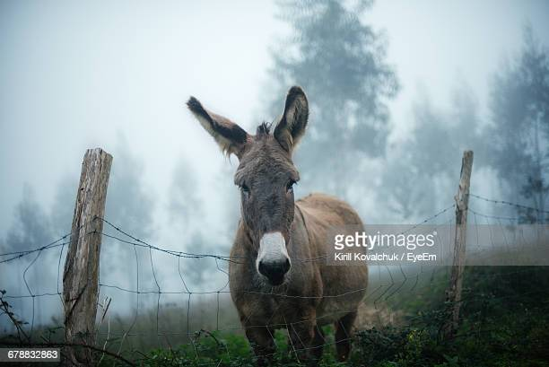 Portrait Of Donkey Standing By Fence During Foggy Weather