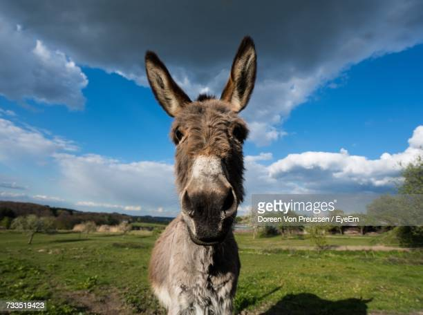 Portrait Of Donkey Standing On Field Against Sky