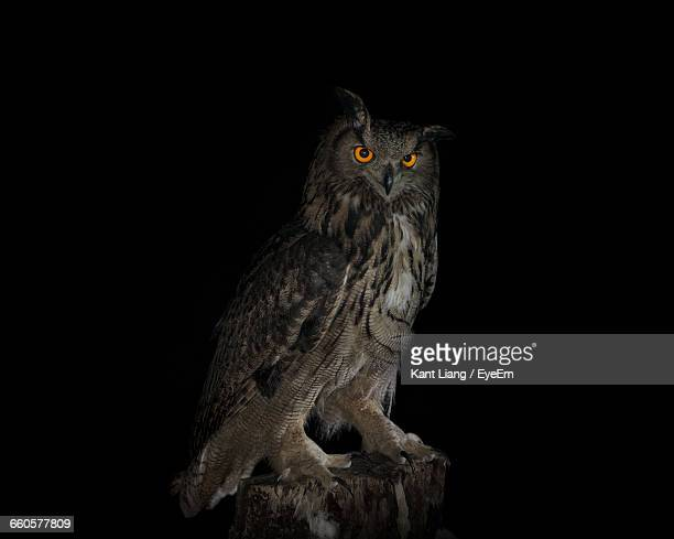 Portrait Of Eagle Owl On Wood At Night