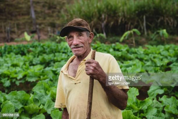 retrato de agricultor idoso na plantação - trabalhador rural - fotografias e filmes do acervo