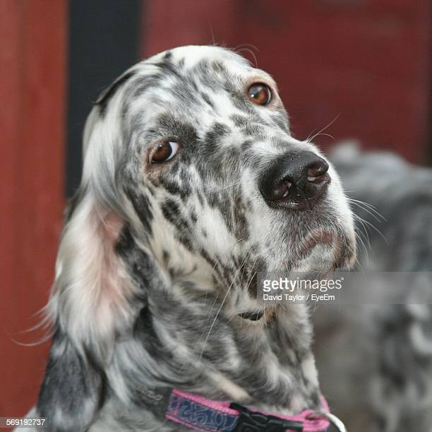 Image Result For Difference Between Puppy And