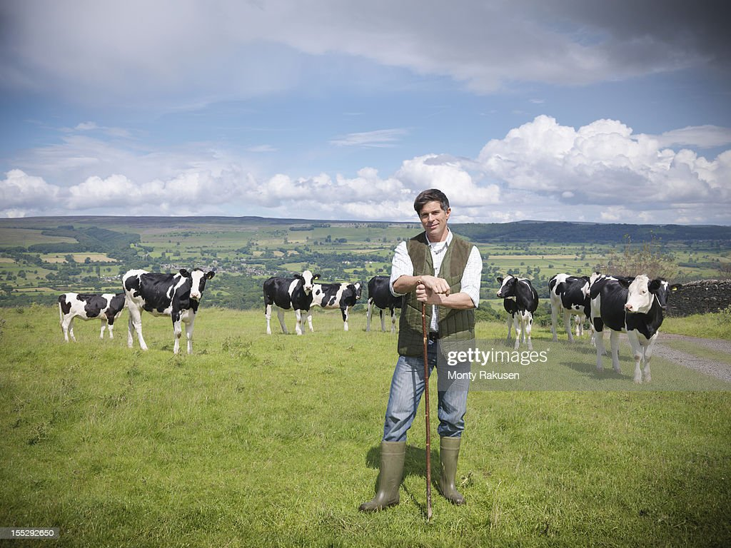 Portrait of farmer and cows in field : Stock Photo