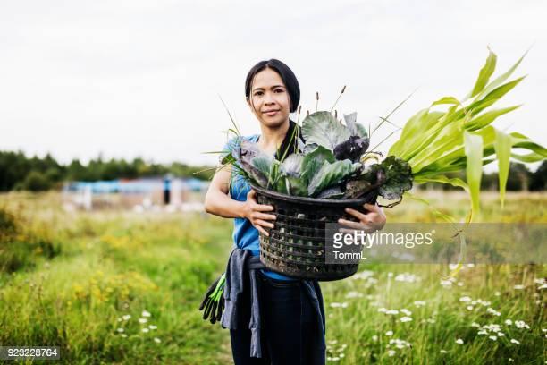 portret van boer holding mand van biologische groenten - sober leven stockfoto's en -beelden