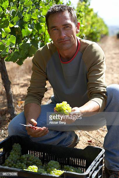 Portrait of farmer holding wine grapes