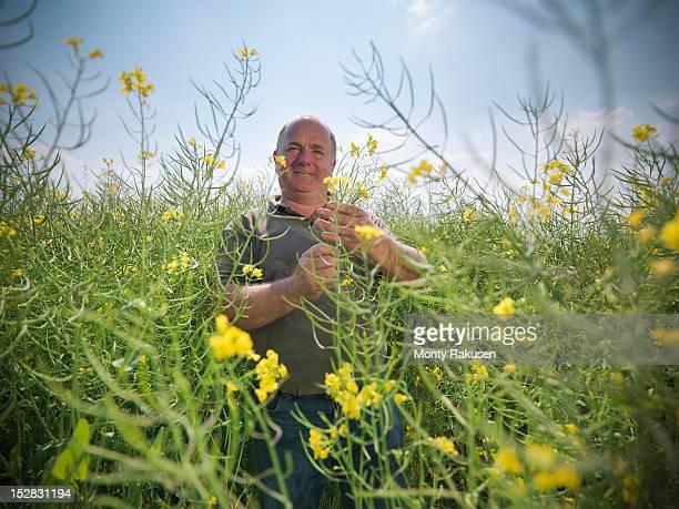 Portrait of farmer inspecting crop of oil seed rape (Brassica napus) in field