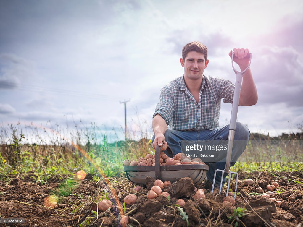 Portrait of farmer with basket of organic potatoes : Stock Photo