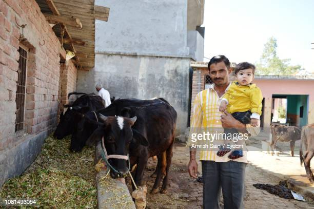 portrait of father carrying son while standing by cattle at farm - herbivorous stock pictures, royalty-free photos & images