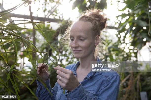 portrait of female biologist examining plant with tweezersin botanical garden - hingabe stock-fotos und bilder