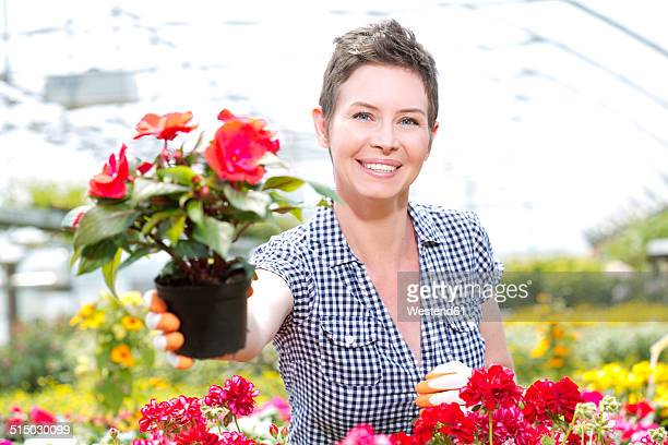 Portrait of female gardener offering potted plant in greenhouse