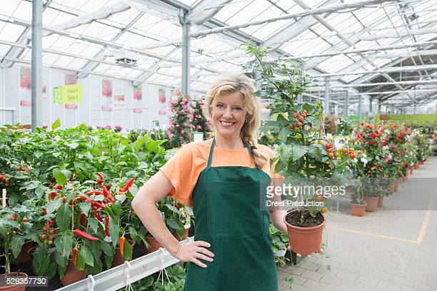 Portrait of female shop assistant holding tomato plant in garden centre, Augsburg, Bavaria, Germany