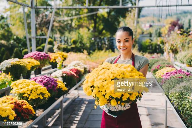 portrait of florist working in the garden center - chrysanthemum stock pictures, royalty-free photos & images