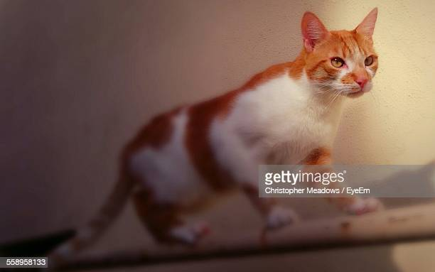 Portrait Of Ginger Cat On Railing