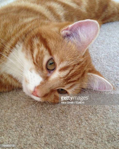 Portrait Of Ginger Cat Relaxing On Rug At Home