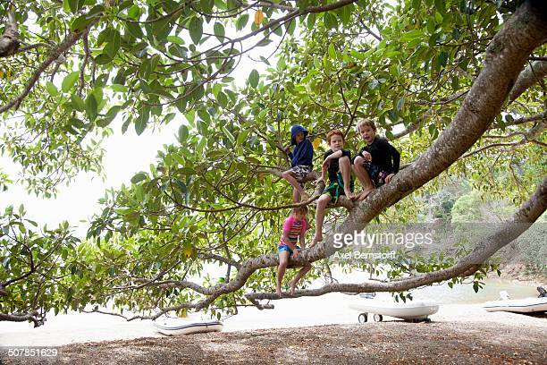 Portrait of girl and three brothers sitting in tree at beach