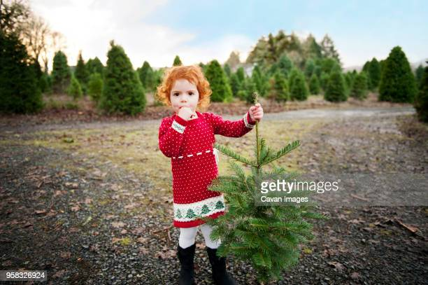 portrait of girl holding christmas tree at field - christmas tree farm stock pictures, royalty-free photos & images