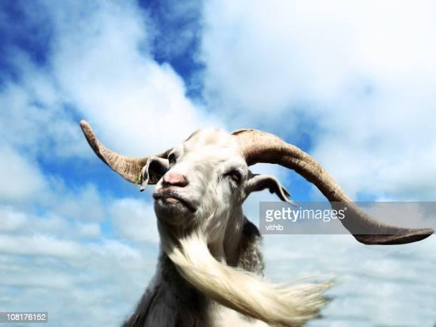 Retrato de cabra con larga barba contra el cielo azul