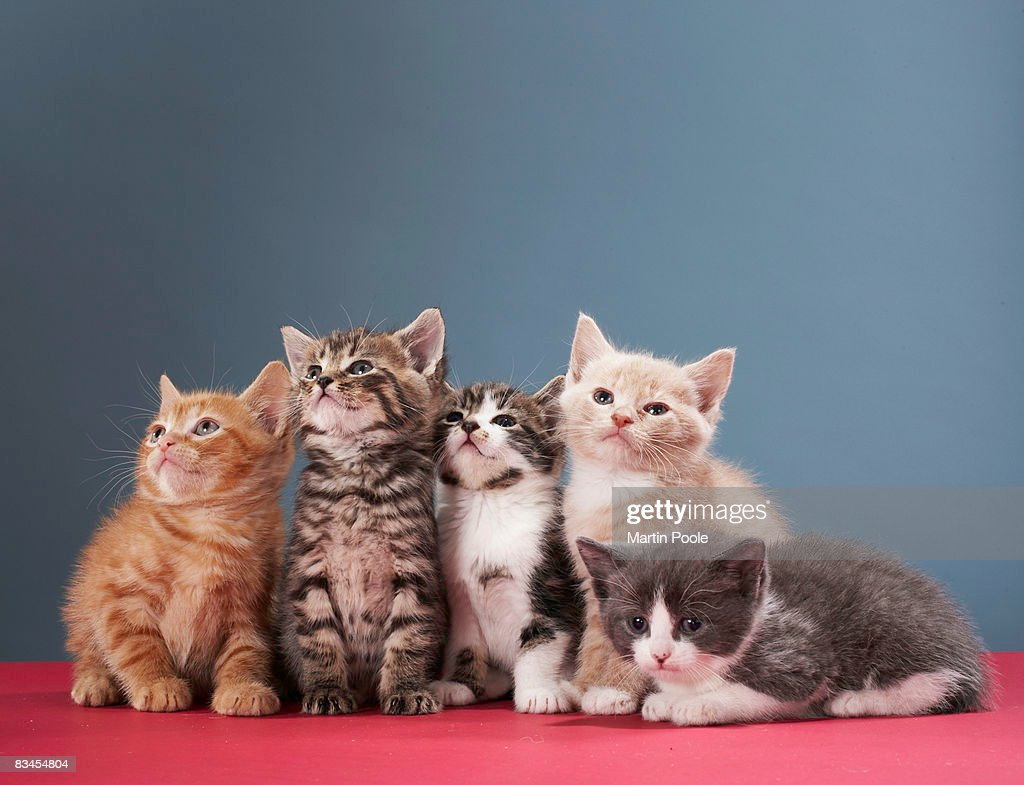 Portrait of group of kittens : Stock Photo