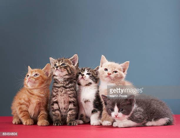 portrait of group of kittens - young animal stock pictures, royalty-free photos & images
