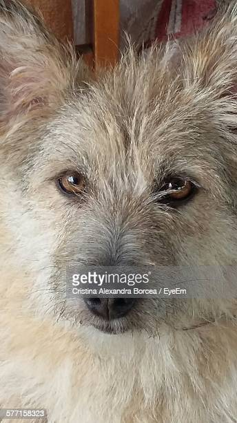 Portrait Of Hairy Dog
